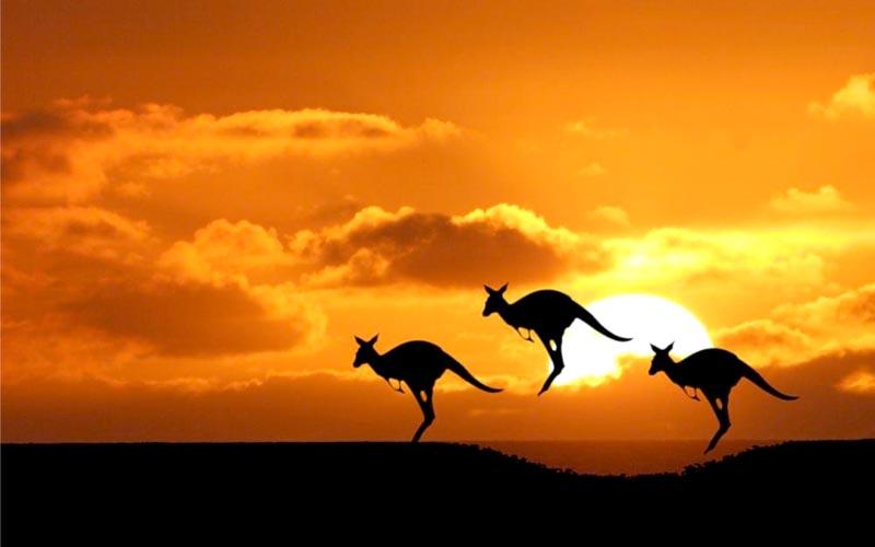 Australian Splendour Tour