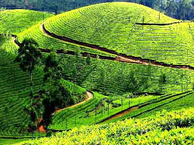 Bengaluru - Mysore - Ooty - Kodaikanal Tour