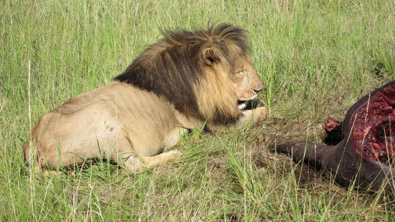 3 Days Masai Mara Adventure Camping Safari Tour