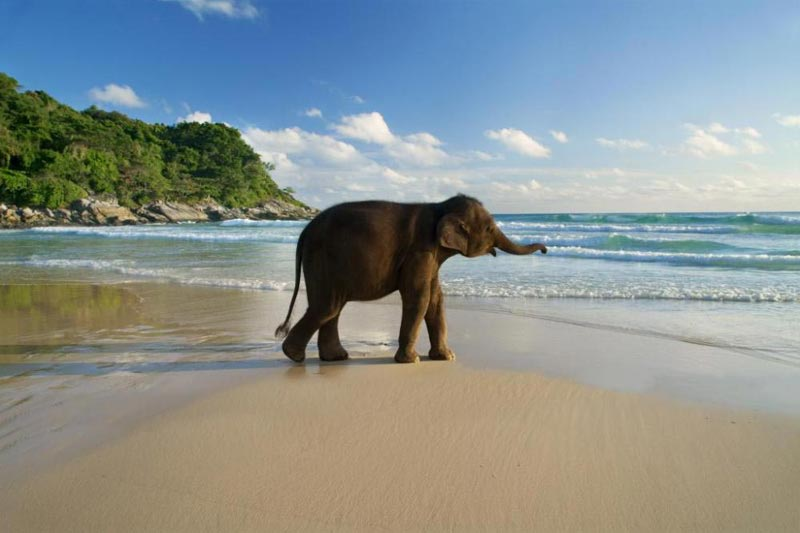 Port Blair With Havelock Tour