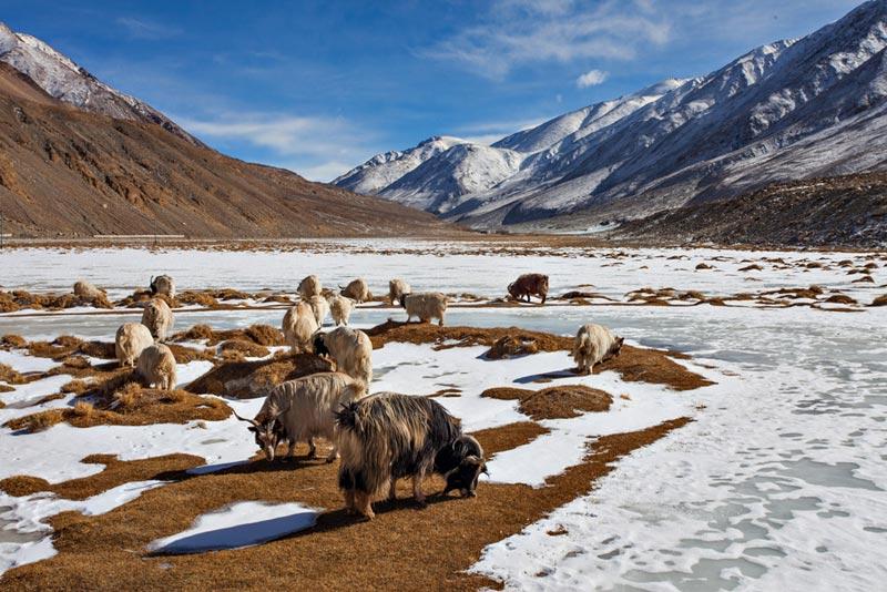 Adventurous Ladakh Tour