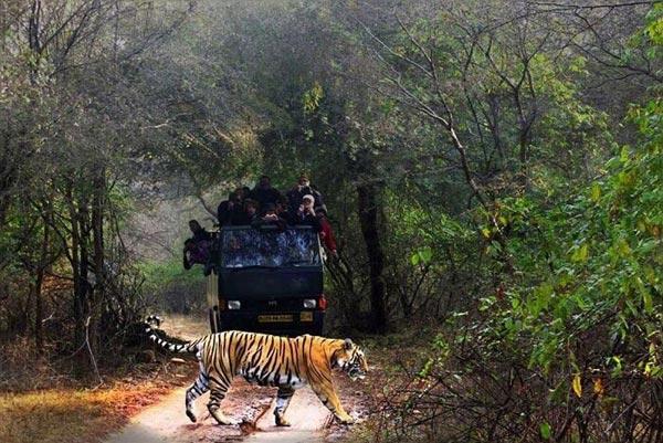 Lucknow Dudhwa National Park Tour