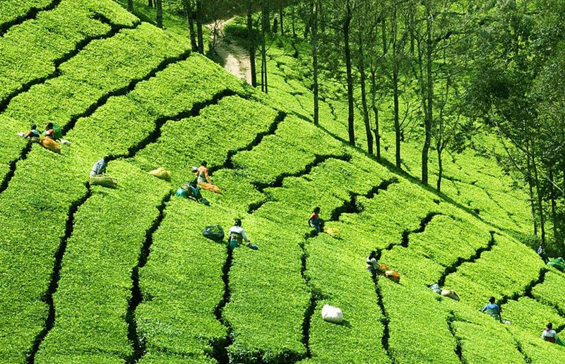 Kerala Ayurveda Health Holiday Tour Packages