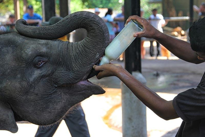 Charming Sri Lanka - 4 Days Excursion Tour
