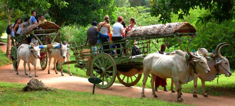 Sri Lanka Luxury Family Escape - 7 Days Tour