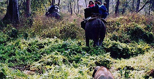 Jungle Tour / Safari Himalayan Dooars -2