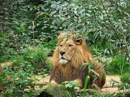 Jungles Of Kanha & Pench Tour