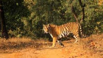 Wilderness Of Madhya Pradesh Tour