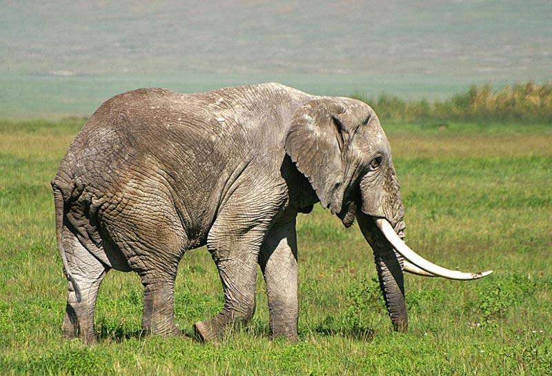 Tanzania & Zanzibar Romantic Safari Tour