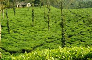 Mysore Ooty & Coorg Tour