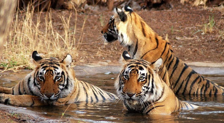Jungle Safari To Kanha National Park Tour