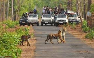 Nagzira National Park Tour