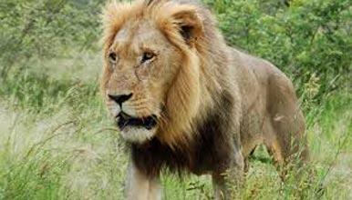 Wildlife Safari Gujarat Tour