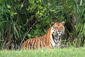 Sundarbans Weekend Tour