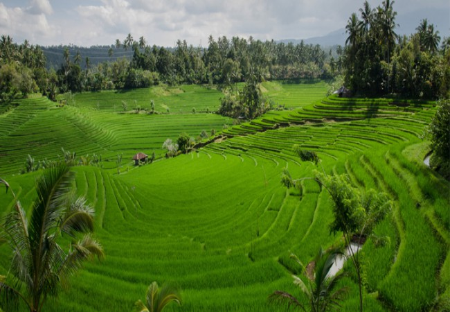 Munnar - Alleppey Tour Package From Cochin