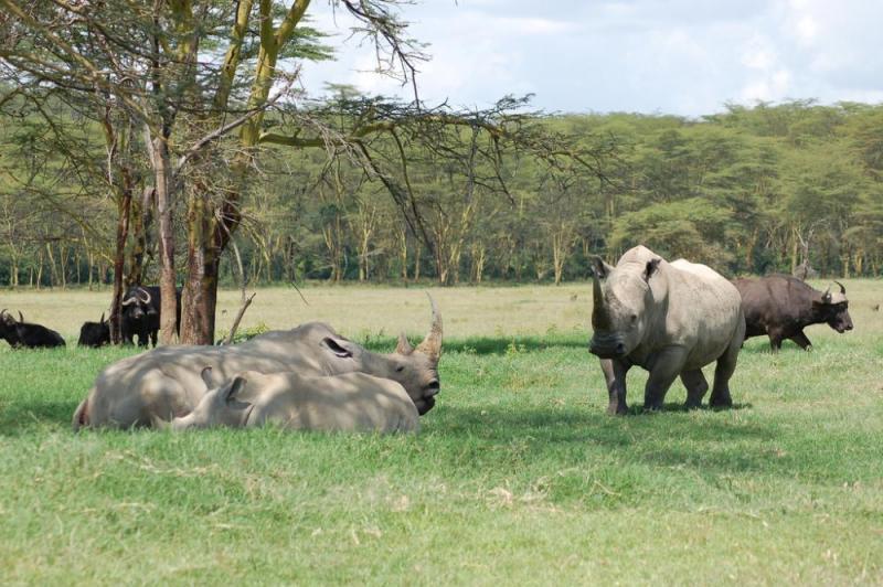 6 Days Masai Mara Lake Nakuru And Samburu Safari Package