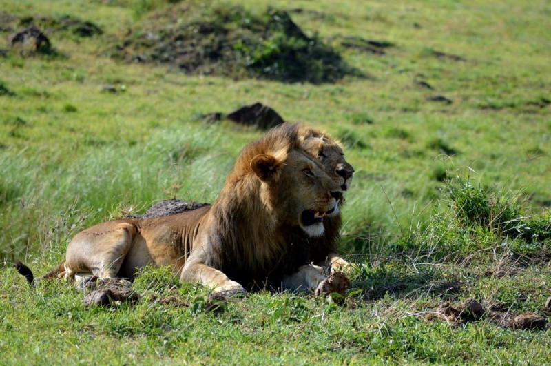 6 Days Aberdares Kigio Masai Mara Safari Package