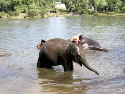 Dubare Elephant Camp - Coorg Tour
