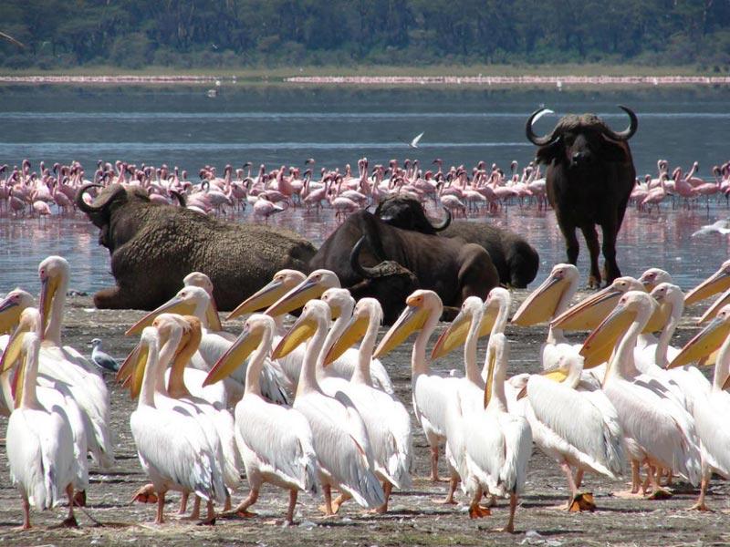 Lake Nakuru Day Trip Tour