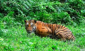 Best Of Rajasthan Wildlife Tour Package