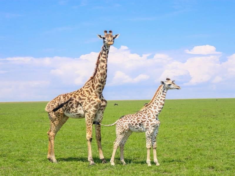 3 Days 2 Nights Masai Mara Safari Tour