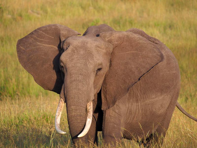 3 Days 2 Nights Amboseli National Park Tour