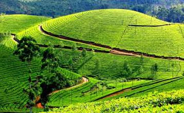 Kerala 5 Nights/ 6 Days Tour