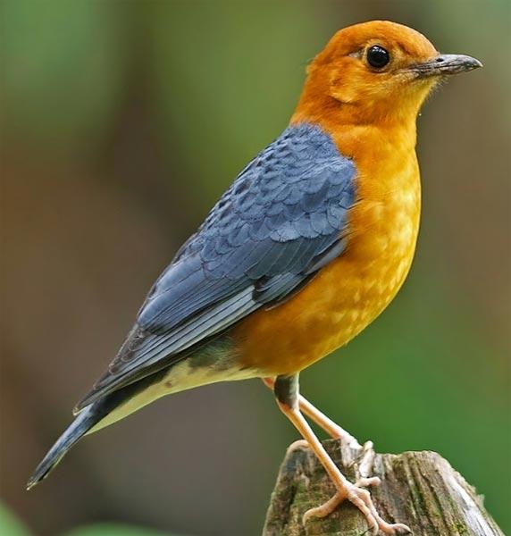 Andaman Bird Watching Tour