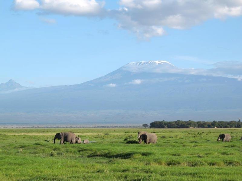 Plains And Migration Safari Tour