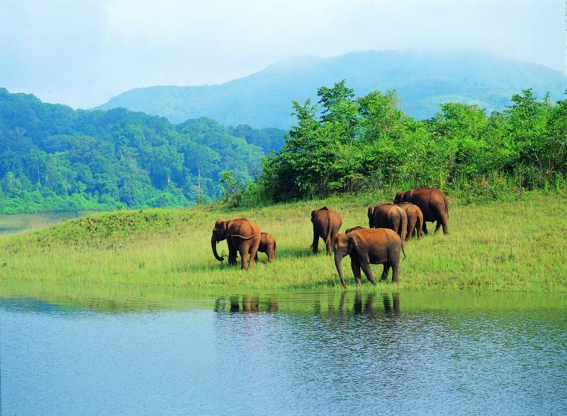 05 Nts & 06 Days Kerala Holiday Package