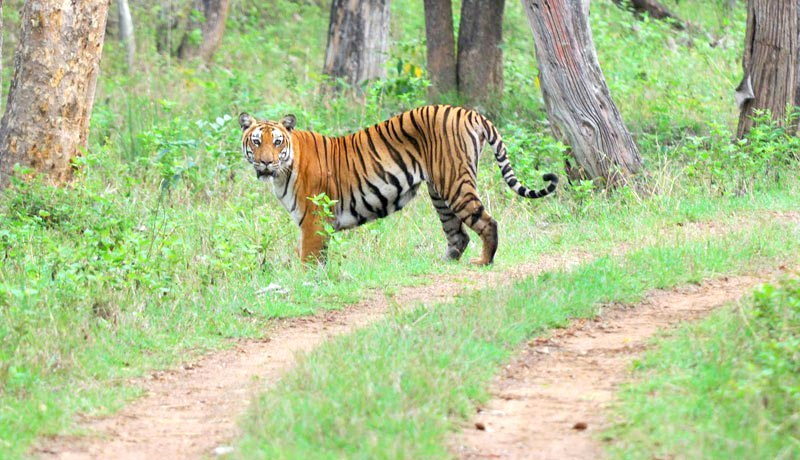 Bandipur Tour - 03 Nights / 04 Days