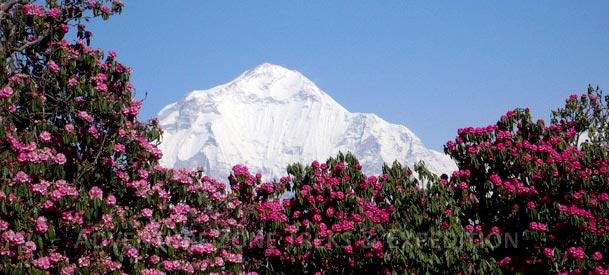 Ghorepani Poon - Hill Trekking