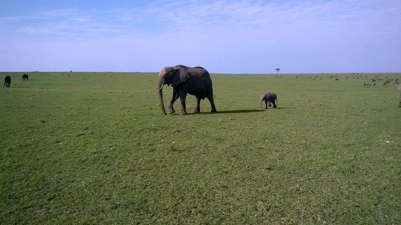 3 Days Masai Mara Camping Safari Kenya
