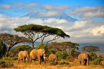 Kilimanjaro Trekking 7 Days Marangu Route