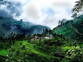 Holiday In Munnar, Wildlife & Backwaters Of Kerala