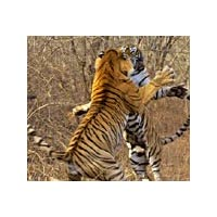 Rajasthan Wildlife Tour Package With Agra