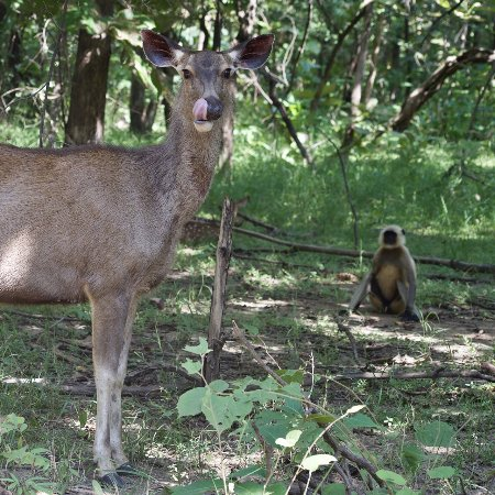 Panna National Park Tour