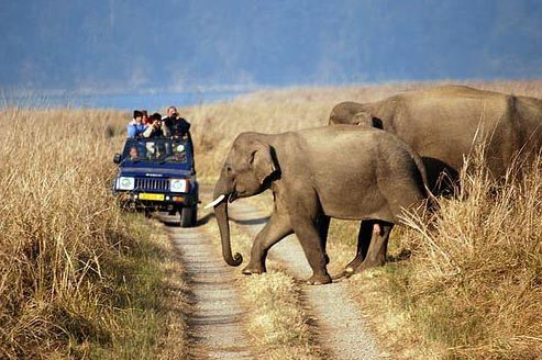 Delhi - Sariska National Park Weekend Tour