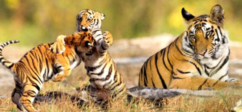 Sundarban Tour Package Tour Kolkata