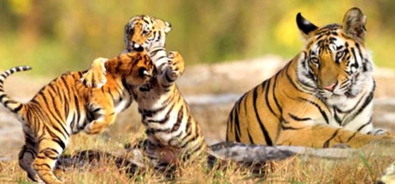 Sundarban Tour Package Tour Kolkata