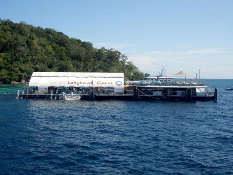 Marine Life Discovery (Reef Platform) Tour