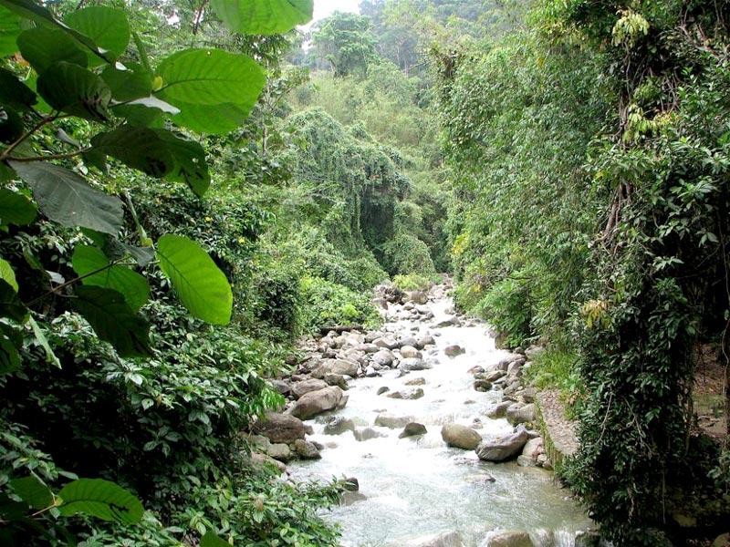 Kinabalu Park Discovery Tour