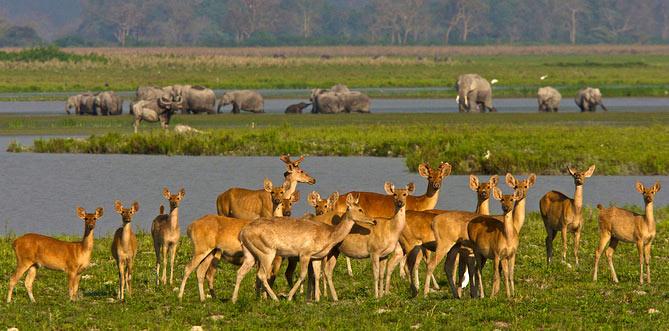 North - East Wildlife Tour