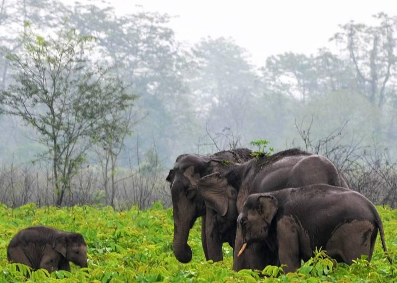 Kaziranga, Nameri, Manash National Park, Pobitora Tour