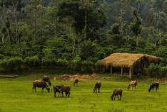 3 Nights And 4 Days Package Hassan And Coorg Tour