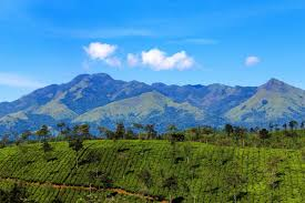 4 Nights And 5 Days Package Bangalore, Mysore And Wayanad