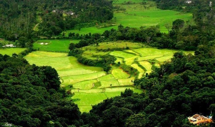 Mangalore - Coorg - Mangalore Tour