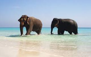 Heart Of Andaman Tour