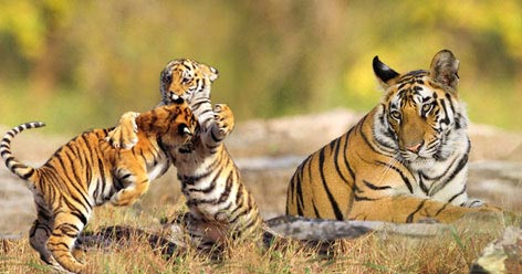 East India Wildlife Tour