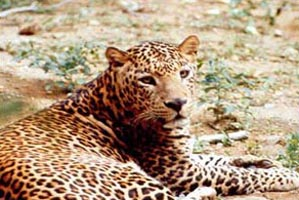 Bangalore - Bannerghatta Nature Camp Tour